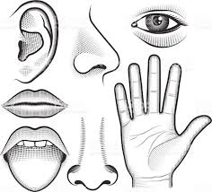 Image result for 5 senses drawings